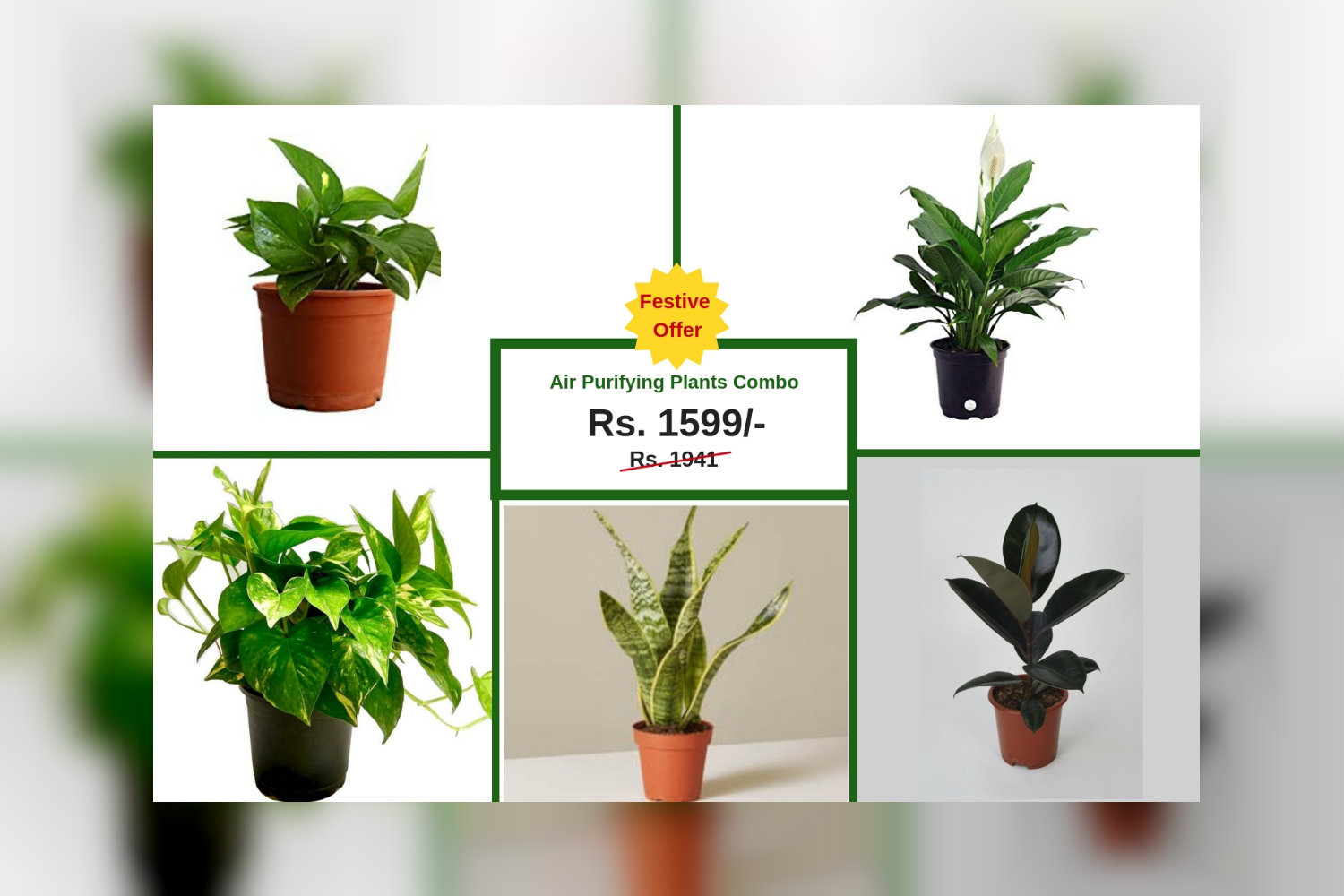 Air Purifier Plants Combo