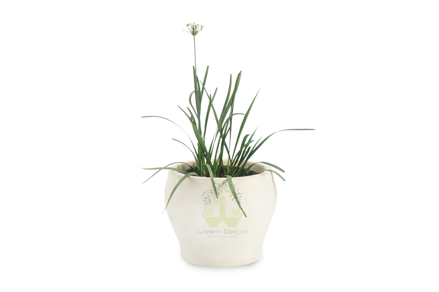 Buy Chives Plants , White Pots and seeds in Delhi NCR by the best online nursery shop Greendecor.