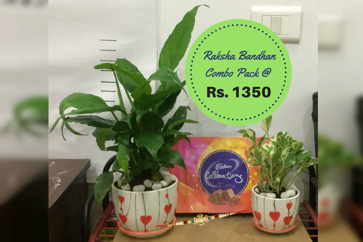 Rakhi Gift Combo Pack with Peace Lily and Marble Money plants like air purifier gift plants by Green Decor