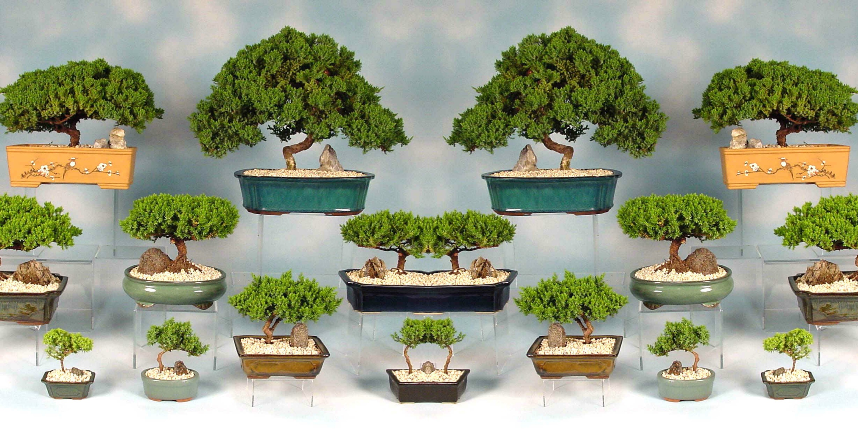 Buy Bonsai Plants , White Pots and seeds in Delhi NCR by the best online nursery shop Greendecor.