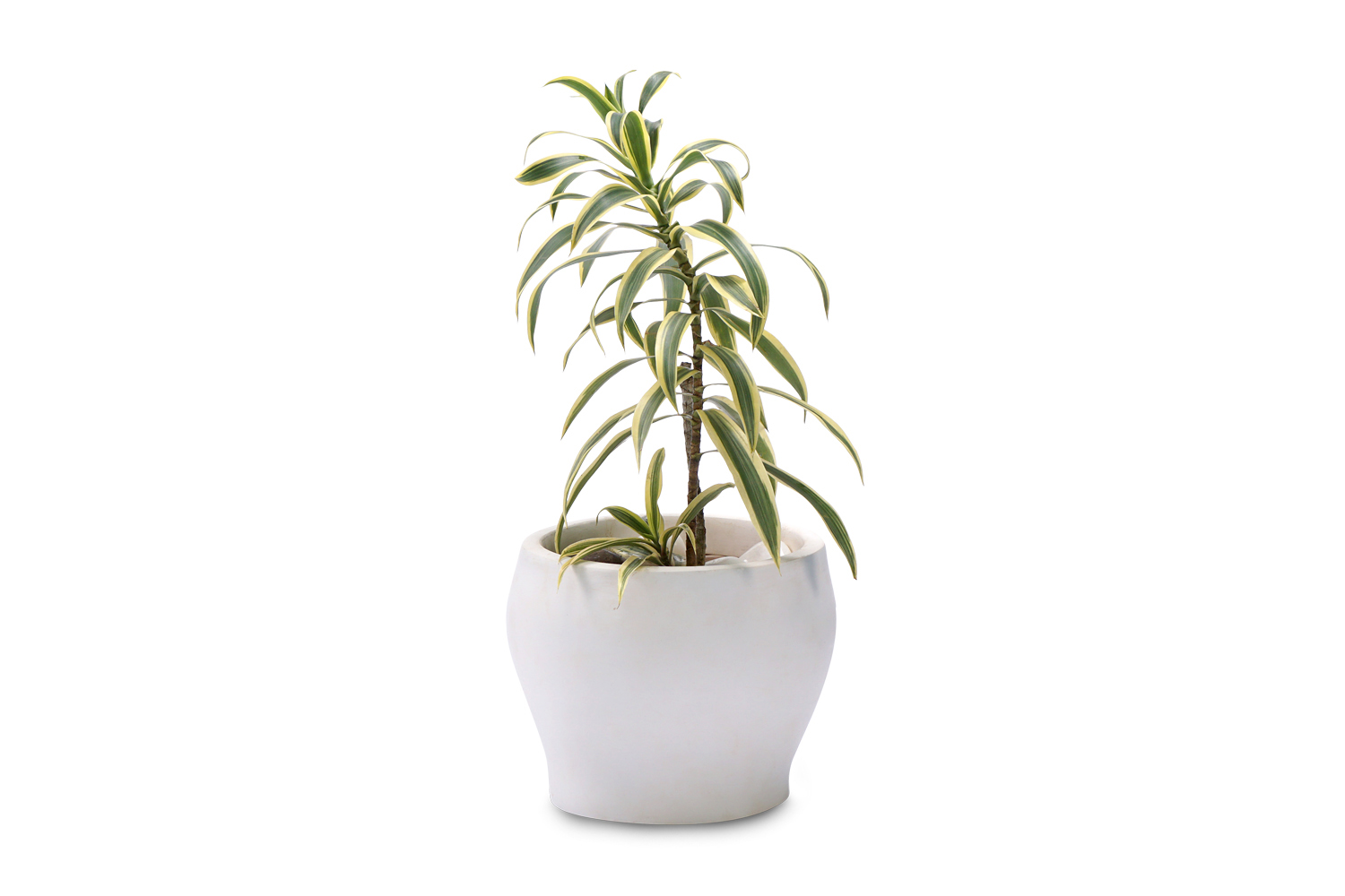 Order Best Plants for Home in Delhi NCR, Buy Gift Plants