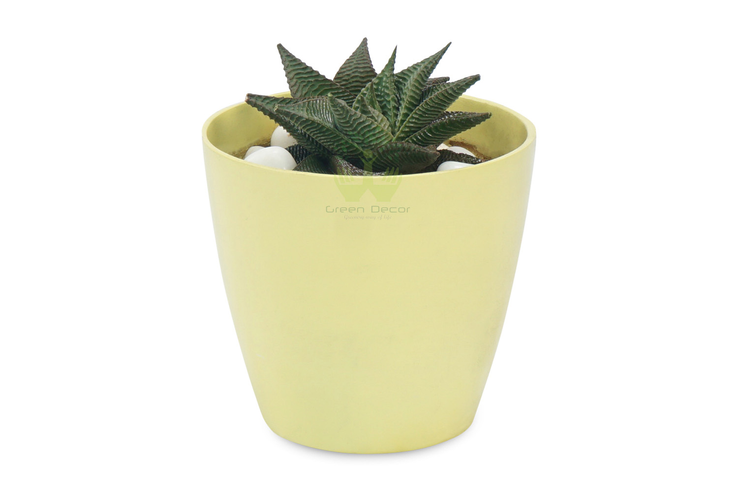 Buy Haworthia reinwardti Plants , White Pots and seeds in Delhi NCR by the best online nursery shop Greendecor.