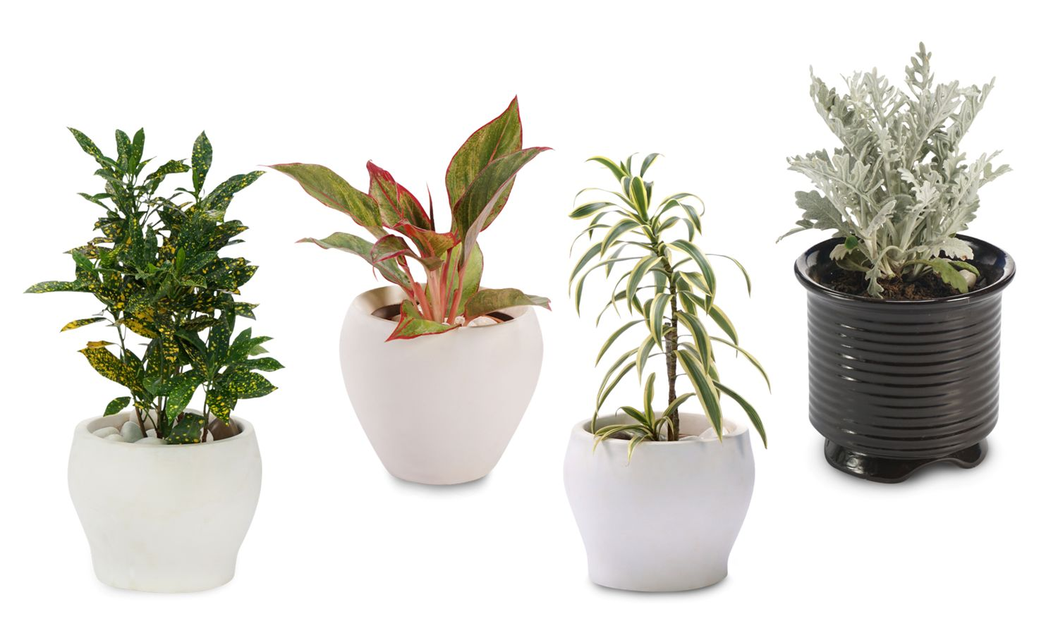 gift-plants-for-birthday