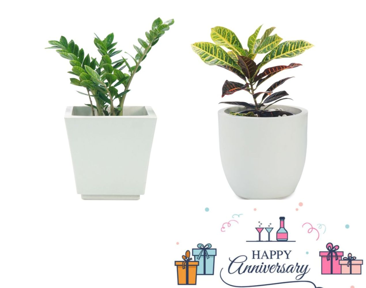 buy office plants combo