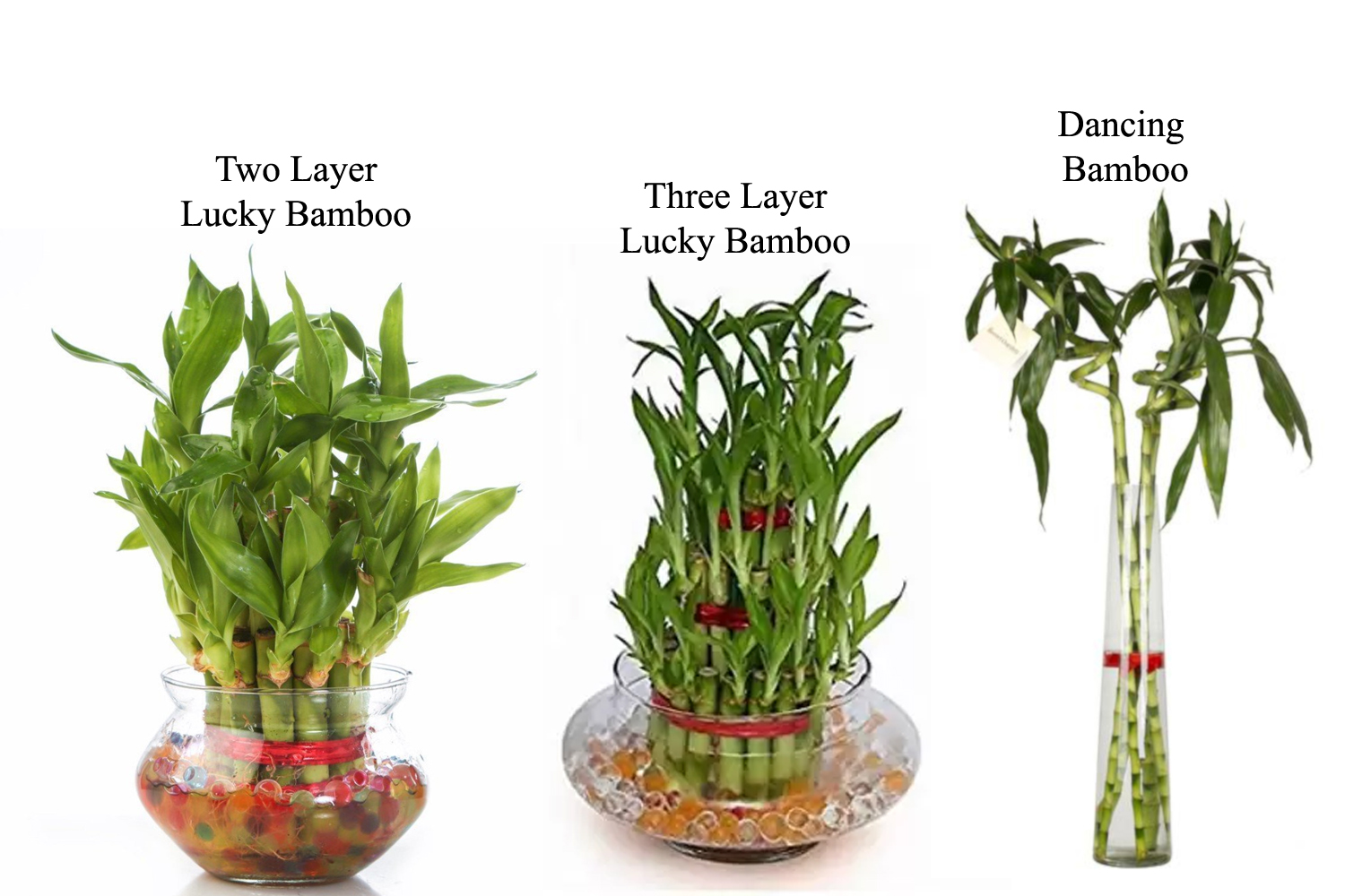 Plants In Bedroom Feng Shui Lucky Bamboo