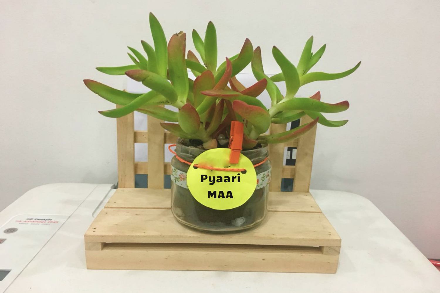 Buy Carassula Campfire Plants , White Pots and seeds in Delhi NCR by the best online nursery shop Greendecor.